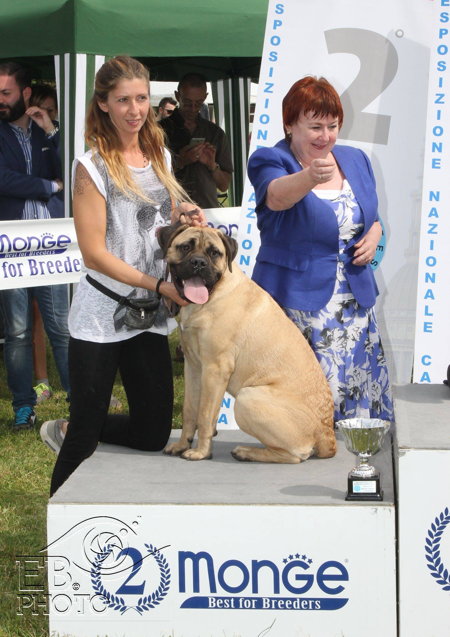 National Dog Show Novara